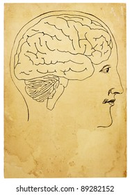 An old style line art illustration of head and brain on aged, stained paper. Artwork is based on illustration from 1876 Journal of Phrenology. Isolated on white, with clipping path.