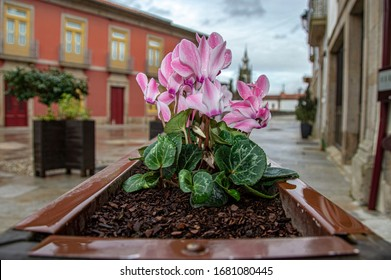 Old style outdoor flower pot decoration near Ponte de Lima Portugal