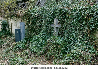 An old Sudeten cemetery overgrown with ivy