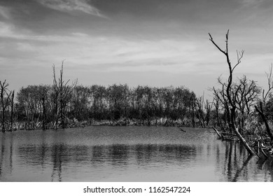 Old swamps and dead trees. Feel horrible horrible atmosphere in black and white tone.