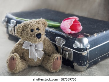 Old teddy bear with vintage suitcase and pink flower