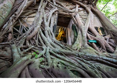 The old temple covered with Bodhi Tree at Wat Bang Kung, samut sakhon thailand