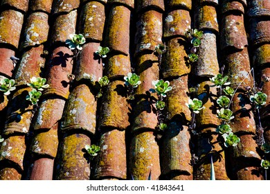 Old tile roof with Aeonium plants