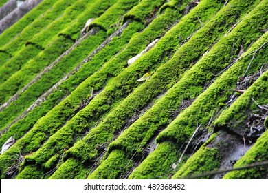 Old tiled roof covered by green moss. Architectural detail.