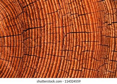 Old timber close up