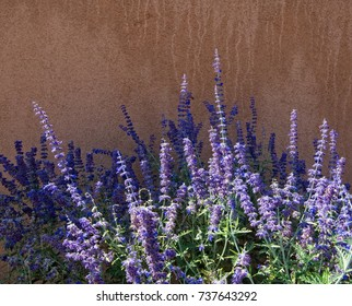 Old town Albuquerque New Mexico. Purple flowers against an adobe wall.