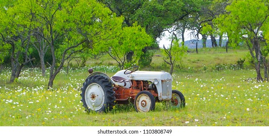 An old tractor in a field with white poppies and yellow wildflowers and a fence