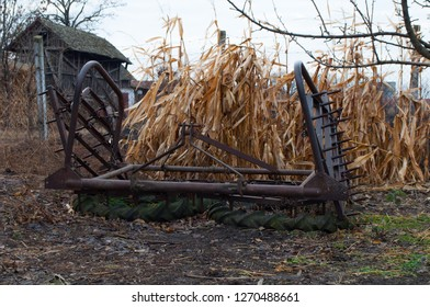 The old tractor harrow was abandoned near dry corn. The machine was used to grind the land where the grain was to be sown.