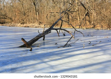 old tree among frozen lake in spring forest