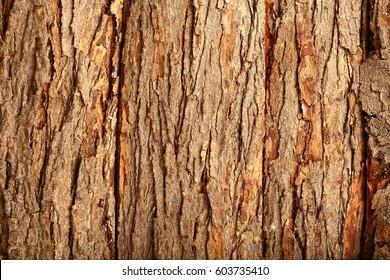 Old tree bark background texture,