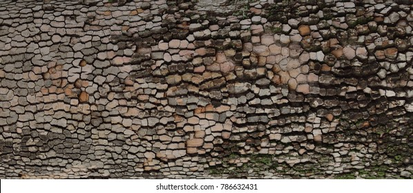 Old tree bark background or texture