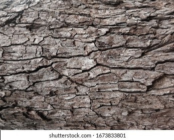 Old tree bark with beautiful patterns for graphic design or wallpapers.Natural background in abstract style.