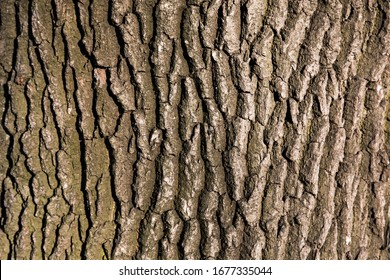 old tree bark texture for screensaver or design