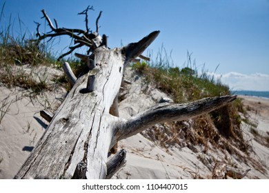 Old tree at the beach
