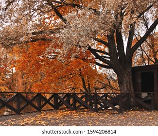 old tree with big branches in a dark autumn park