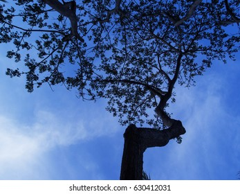 Old tree branch silhouette on blue sky. Bushy oak branch with leaves ornament. Tree on sky background photo. Black branches silhouette on evening sky. Summer forest with naked tree. Seaside tree