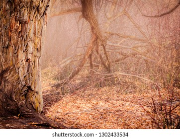 An old tree branch, surrounded by an autumn scene, reaches into a foggy background and looks like a claw extending from an arm, waiting to snatch you up.