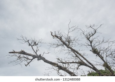 Old tree branches against cloudy sky