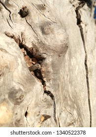Old tree burned, petrified, fossilized. Surreal environment. Light color background. Old wood.