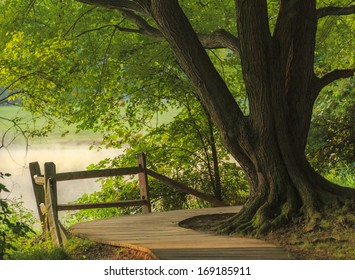 Old tree by the lake
