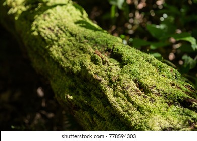 Old tree covered with green moss.