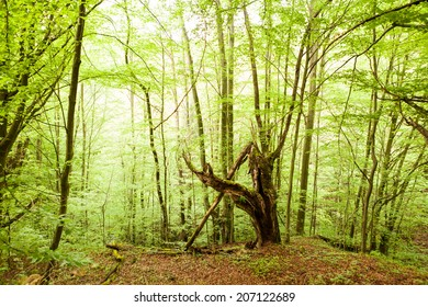 Old tree in forest