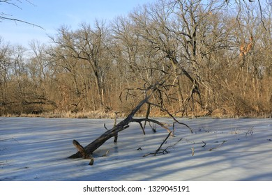old tree frozen in ice on swamp in spring forest