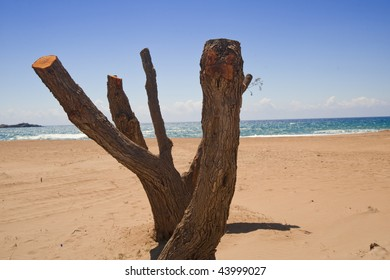 Old tree has been cut and hot summer sun does the rest. Sea on the background.