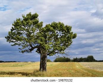 Old Tree Landscape