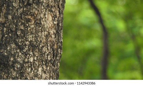 old tree log for creative, design and art, Isolated on green background in forest.