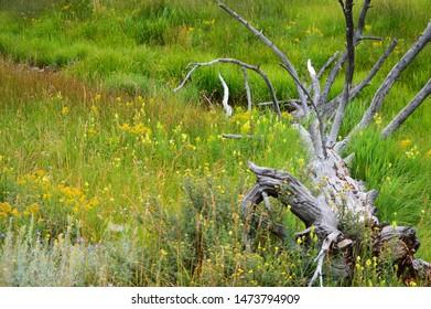 Old tree log down in field of wild flowers near stream.