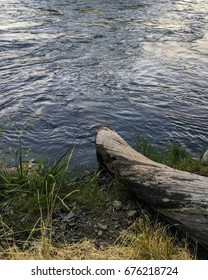 Old tree log on riverbank.