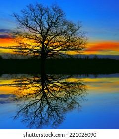 old tree in night with water reflection