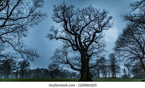 old tree in the park, oak
