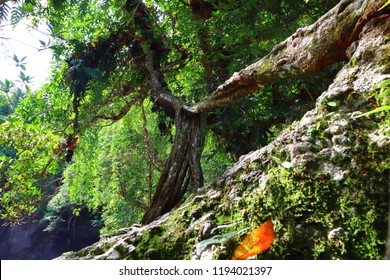old tree in rain forest