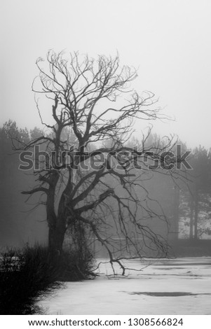 old-tree-reaching-out-frozen-450w-130856