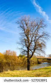 An old tree and river in autumn