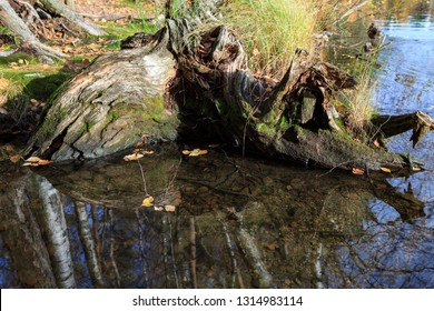 Old tree roots decay in water