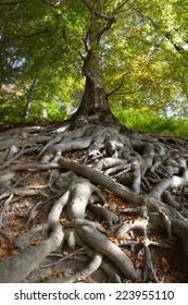 Old tree roots, park castle Hukvaldy, Czech Republic