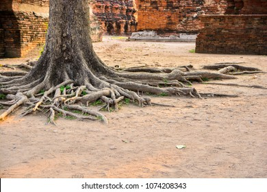 Old tree roots at the temple