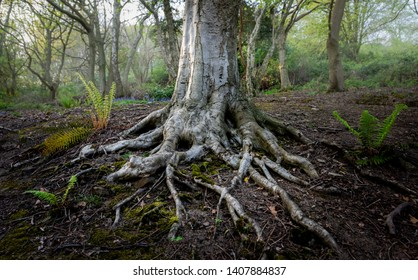 Old tree with roots visable