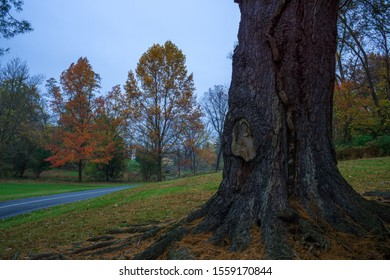 An old tree stands vigil over a park pathway. This photo from Allentown's Trexler Park during an Autumn morning. I love how the camera captures the texture of the tree's bark and color in the trees.