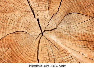 Old tree stump, beautiful wooden texture background with cracks