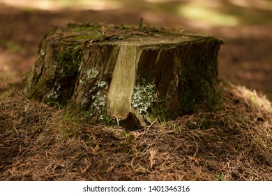 Old tree stump covered with moss in an African forest, Aberdare Ranges, Kenya