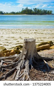 An Old Tree Stump with Exposed Roots on the Beach with the Ocean in the Background