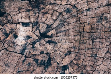 Old tree stump texture backgroud wooden nature texture table top for design blackdrop or overlay