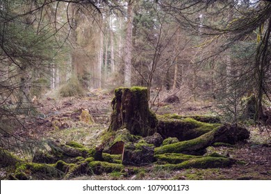 Old tree stump in woodland, covered with moss and grass at Beecraigs Country Park, Linlithgow, West Lothian, Scotland, United Kingdom.