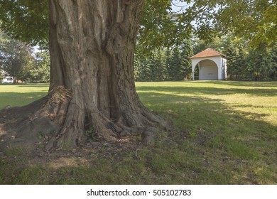 Old tree and summer hut in park of castle Slovenska Bistrica, Slovenia