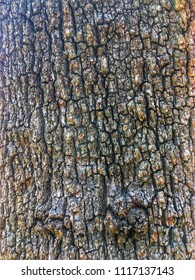 Old tree with textured brown bark in Dover, DE