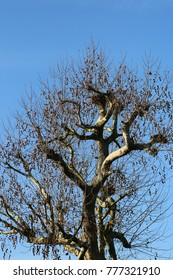 Old tree top